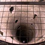 Rimski bunar: Najveća misterija Kalemegdana