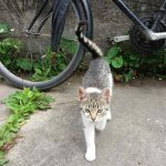 Mačke sa radnim stažom: Čuvaju gradilišta, Ermitraž i naša srca