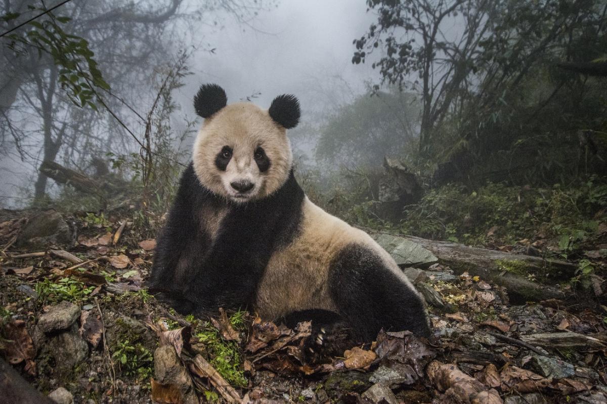 Foto-6_Ami Vitale_National Geographic