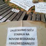 Protest zbog seče drveća na Kalemegdanu, zasađeno novo drvo