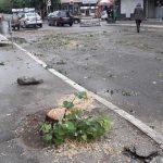 Aleksinac: Jučerašnja seča stabala u glavnoj ulici nelegalno izvedena
