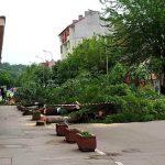 RERI: Seča drvoreda u Aleksincu bez poštovanja procedura i odobrenja nadležnih