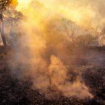 Gore pluća sveta: Porastao broj požara u Amazoniji (VIDEO)
