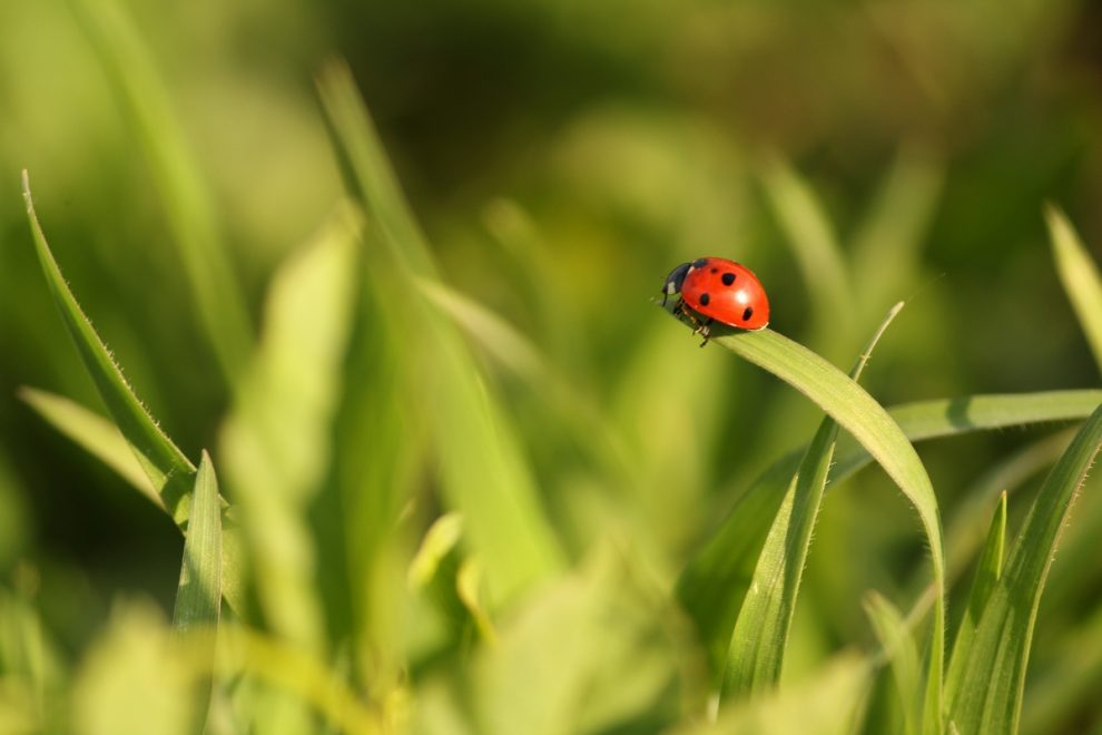 mediasfera-foto-suzana-bogdanovic-price-da-li-je-trava-zelenija-u-tudjem-dvoristu-jpg.jpg