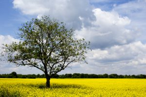 biodiverzitet-Aleksandar-Jocic-jpg