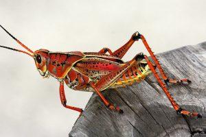 mediasfera-bec-insekti-novi-proteini.jpg