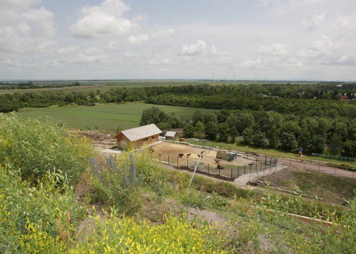 Becka-deponija-solarna-energija-raj-za-koze-2jpg