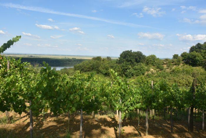Grocka-vinogradi.jpg
