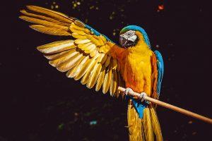 Sofi-Planeta-Papagaj-doktor.jpg