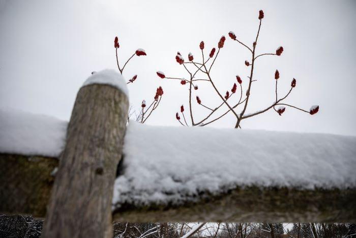 Biljka-sa-crvenim-bobicama-Foto-Lazar-Petrovic-student-fotografije-na-Seneca-college-u-Torontu-min-1.jpg