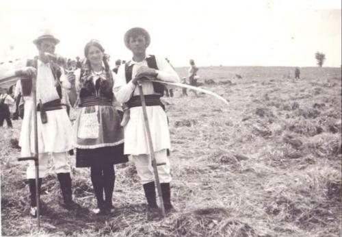 Prva-kosidba-1970-godine-foto-porodice-Mijailovic-iz-Ljiga-1
